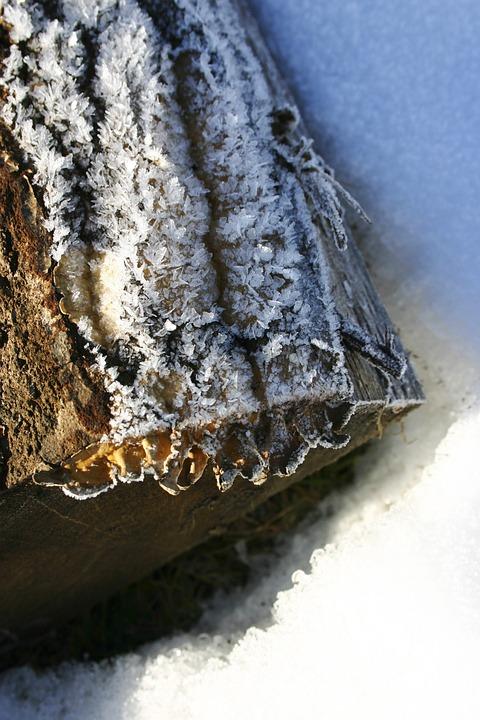 Icing, Winter, Nature, Slovakia, Snow, Tree