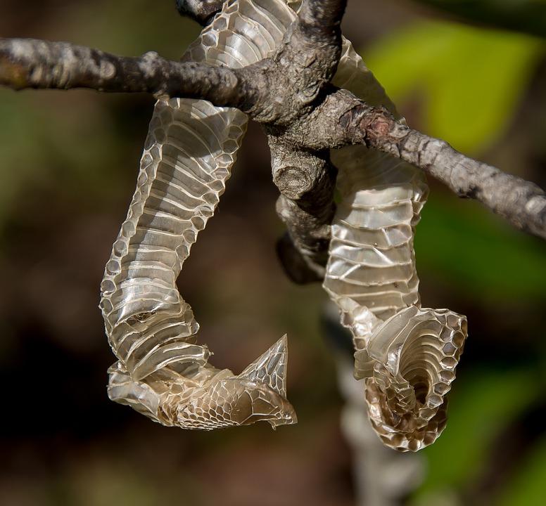 Snakeskin, Skin, Snake, Pattern, Tree, Old, Discarded