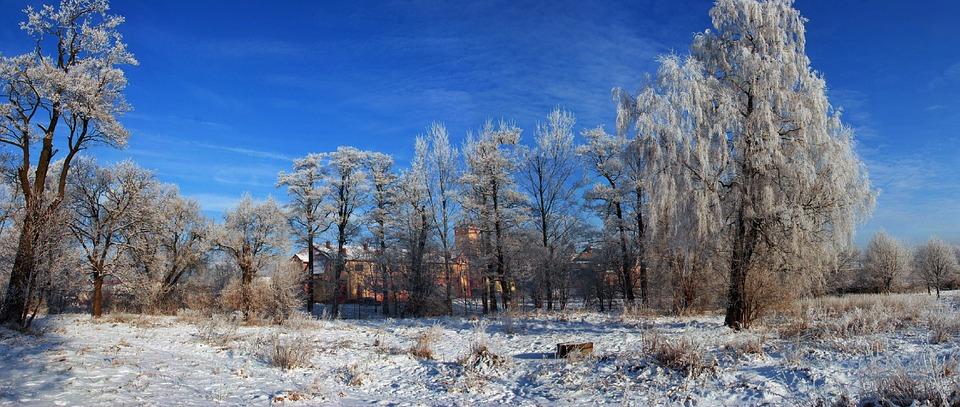 Nature, Winter, Tree, Snow, Frost, Landscape