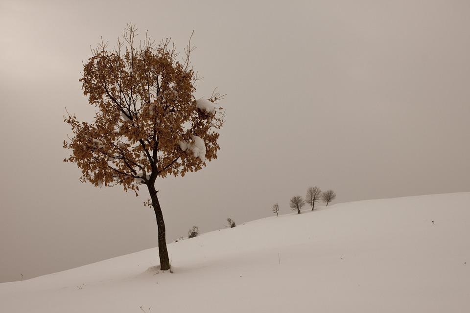 Winter, Snow, Tree, Snow Landscape, Nature, Mountain