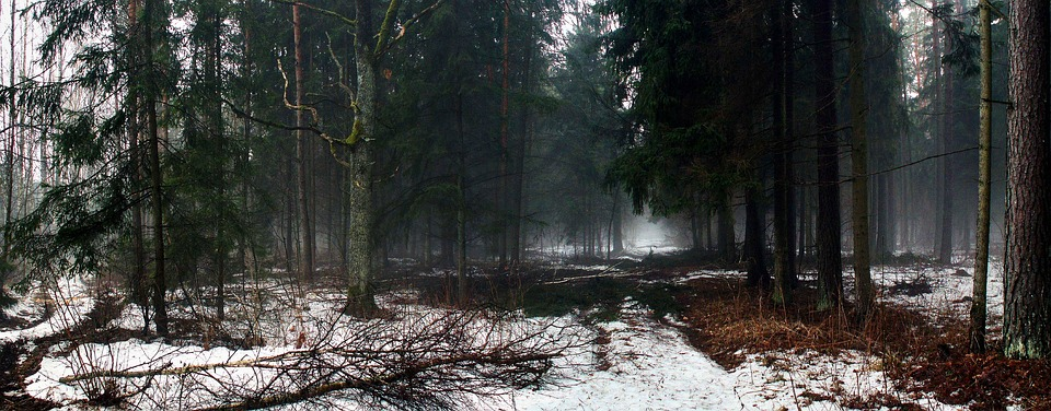 Nature, Tree, Panoramic, Forest, Snow, Winter