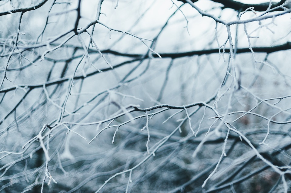 Branches, Tree, Cold, Frost, Outdoors, Snow, Winter