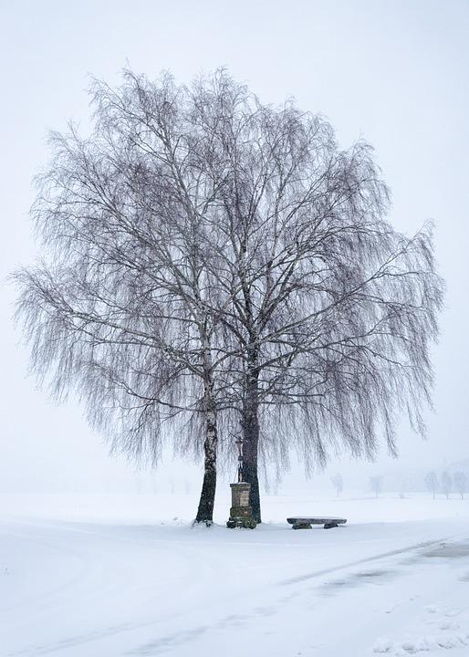 Snow, Winter, Frost, Cold, Tree, Landscape, Snow White