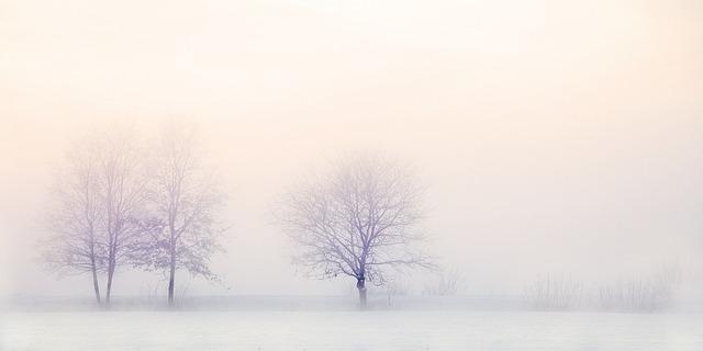 Winter Landscape, Trees, Snow, Nature, Snowy, Tree