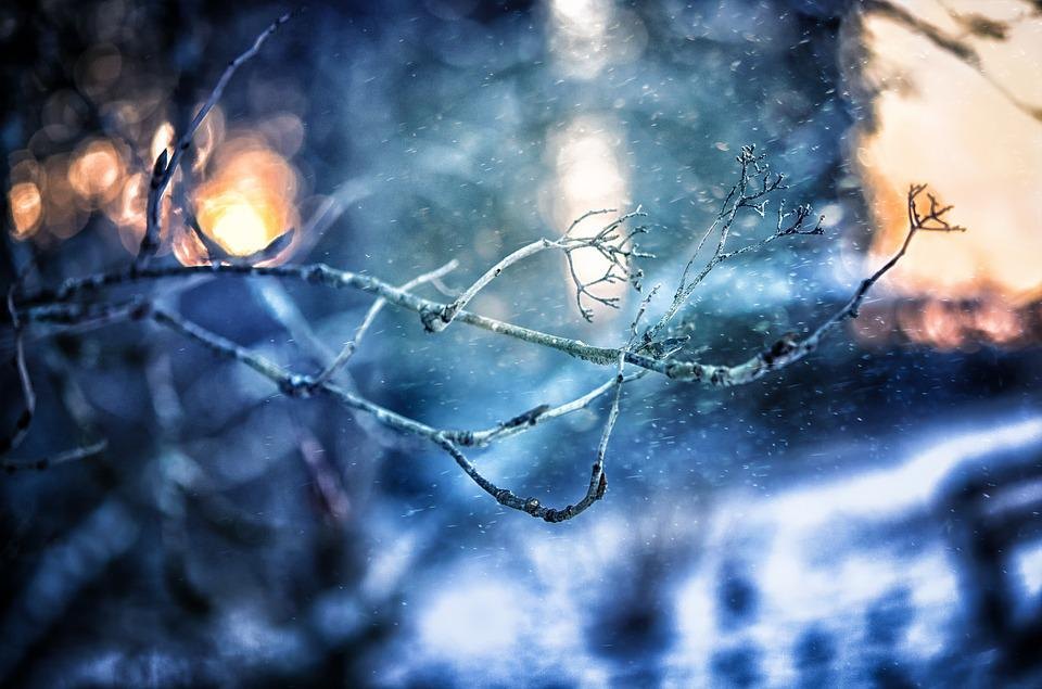 Tree, Branch, Winter, Snowfall, Finland, Nature, Forest