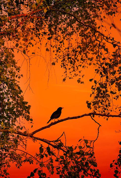 Bird, Merle, Nature, Spring, Tree, Branches, Leaves