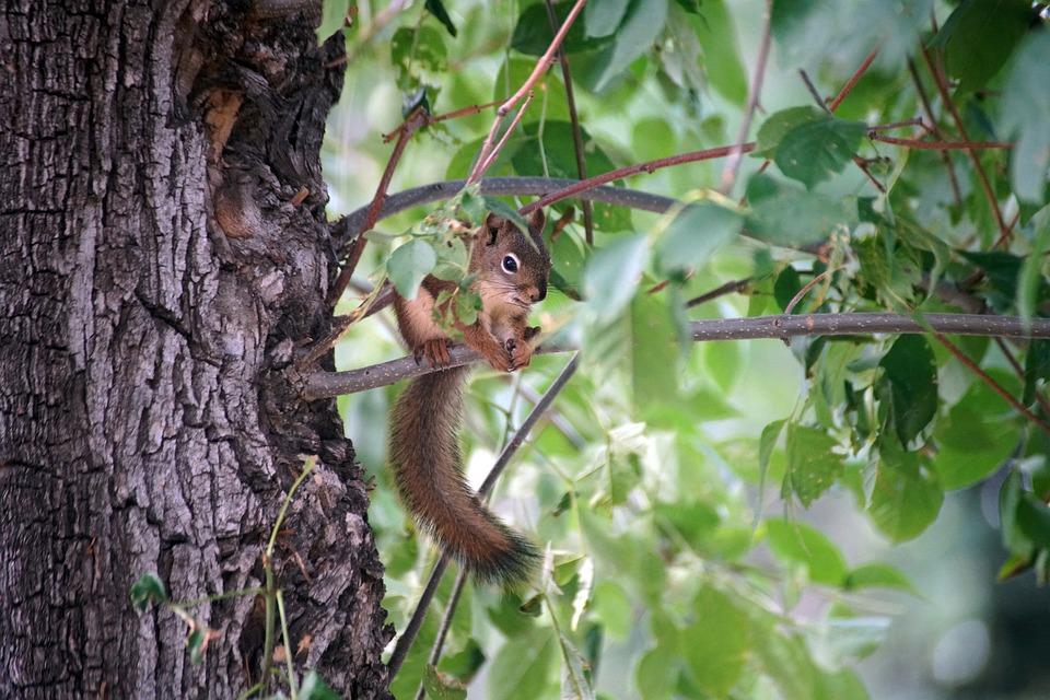 Squirrel, Tree, Nature, Animal, Rodent, Cute, Wildlife