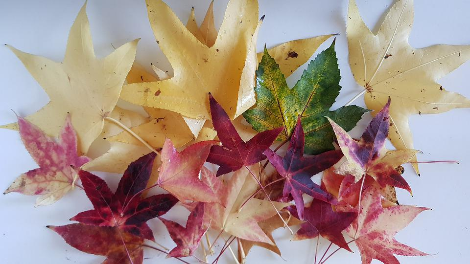 Leaves, Autumn, Still Life, Nature, Tree, Colorful