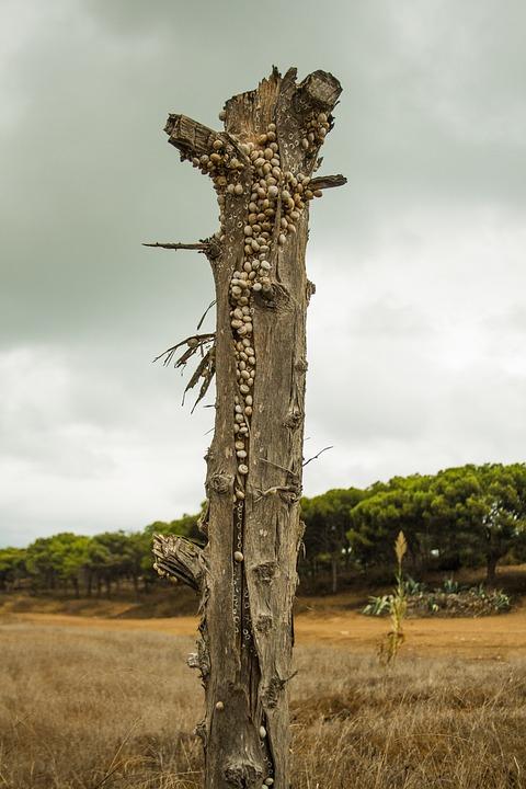 Snails, Tree Stump, Bark, Field
