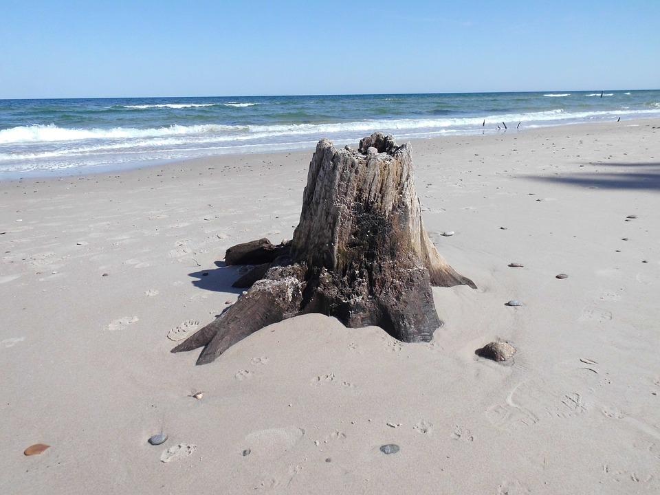 Tree Stump, Water, Beach