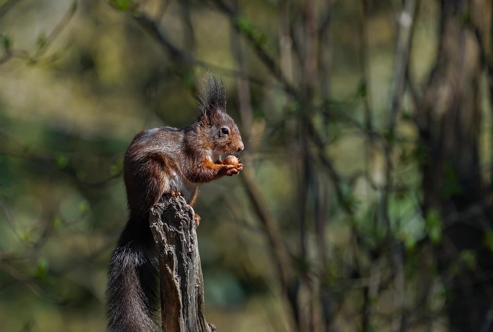 Squirrel, Tree Stump, Nut, City Park