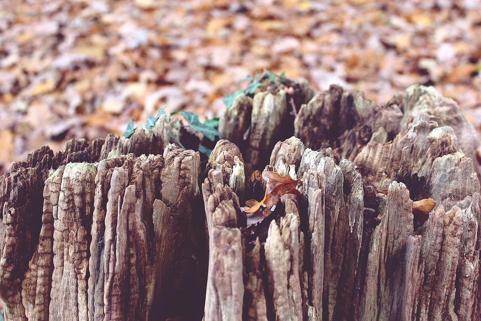 Tree, Tree Stump, Autumn, Nature, Wood, Forest, Broken