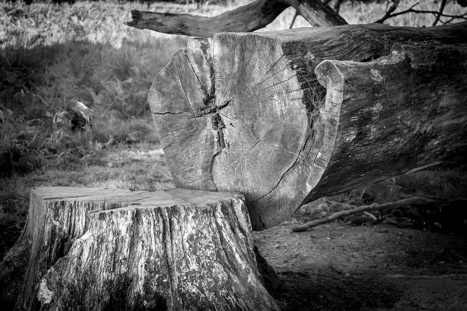 Tree, Tree Stump, Log, Like, Sawed Off, Wood, Forestry