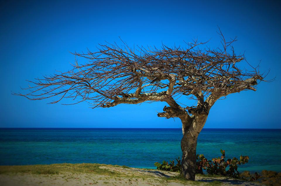 Cuba, Summer, Tree, Withered Tree, The Beauty Of Nature