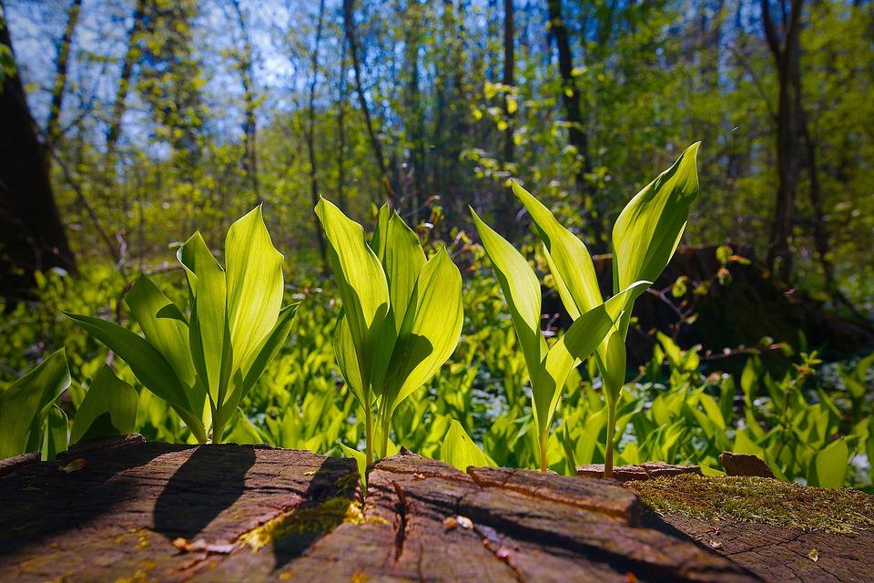 Nature, Wood, Plant, Leaf, Summer, Tree, Growth
