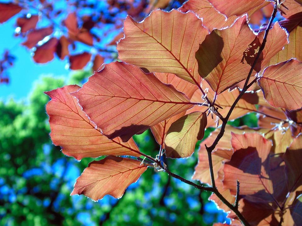 Leaves, Leaf, Nature, Plant, Tree, Foliage, Summer