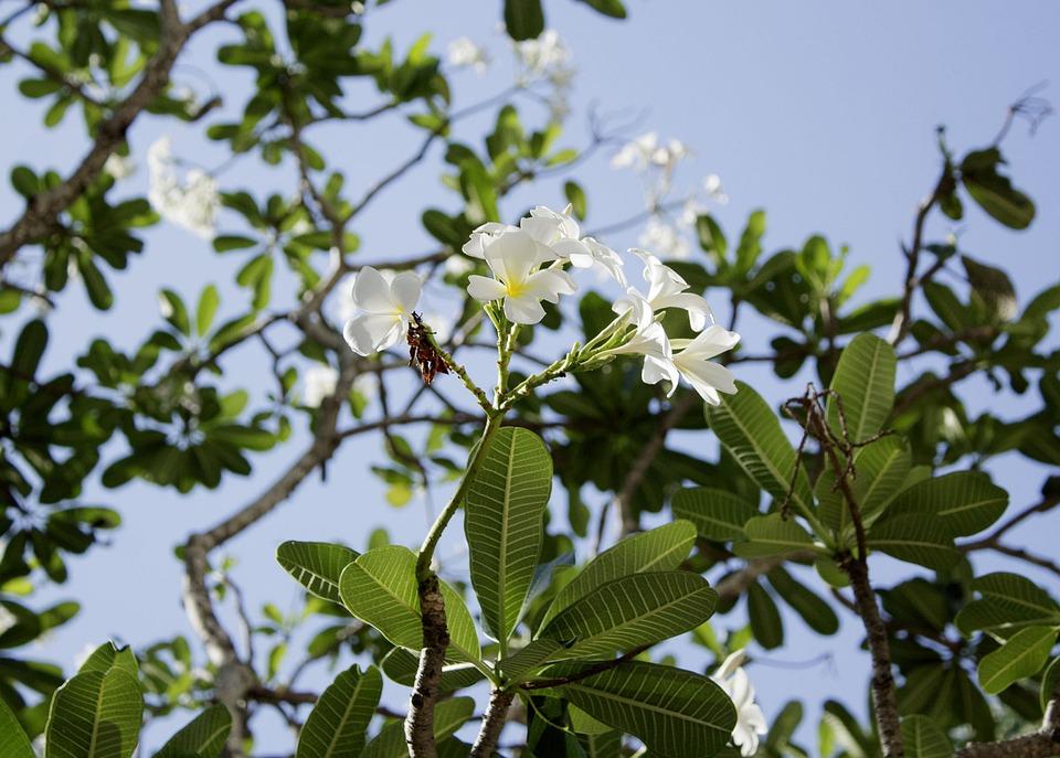 Porcelain Flower, Nature, Garden, Summer, Spring, Tree