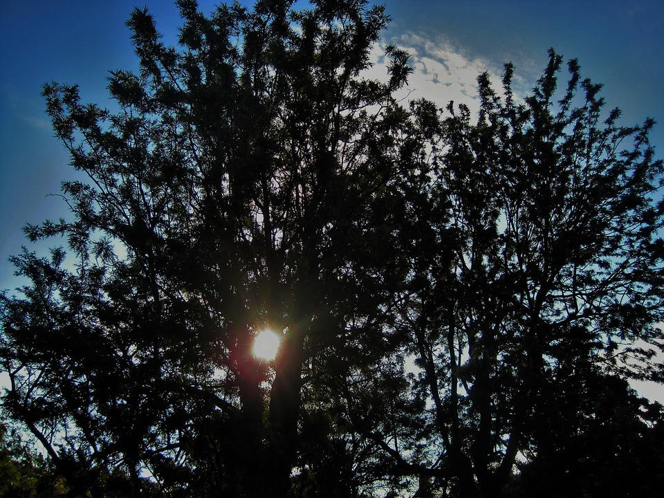 Sun Through Branches, Tree, Branches, Dark, Sun, Bright