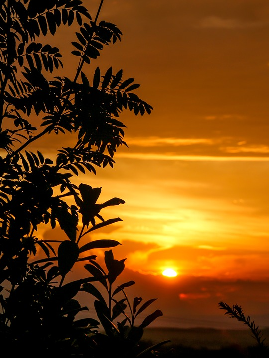 Sunset, Tree Silhouette, Tree, Sky, Golden Sky, Sun
