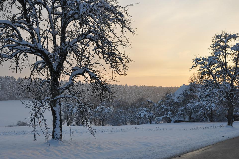 Sunset, Tree, Wintry, Black Forest