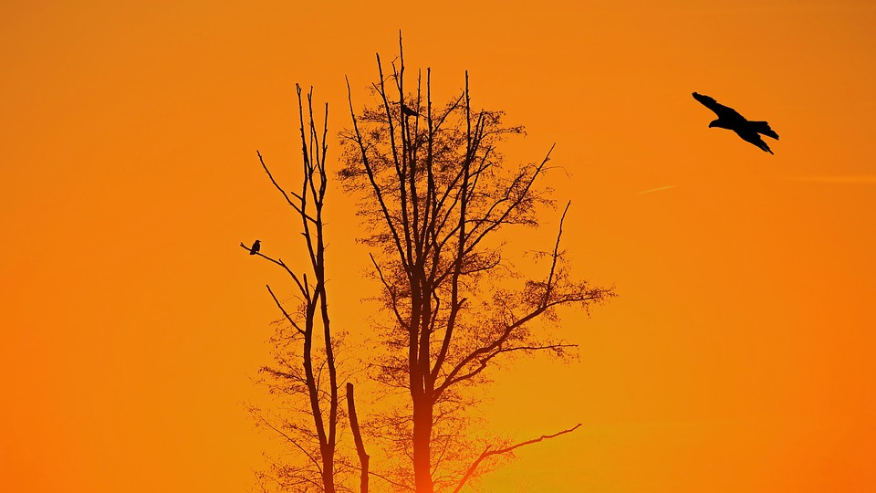 Sunset, Tree, Birds, Evening, Afterglow, Twilight