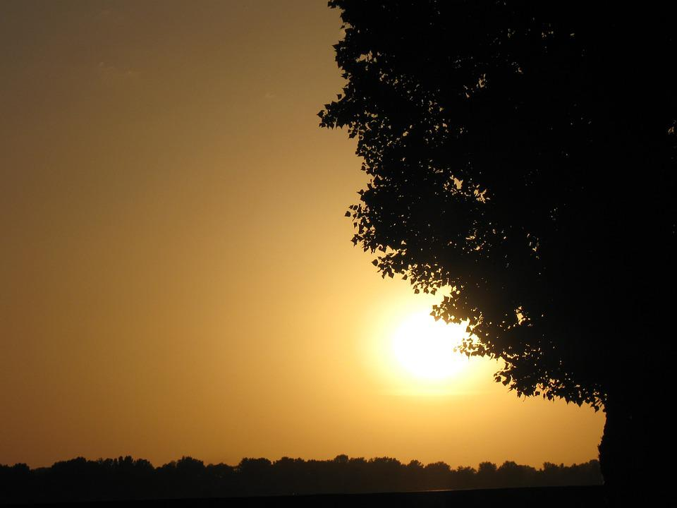 Ukraine, Tree, Landscape, Sunset