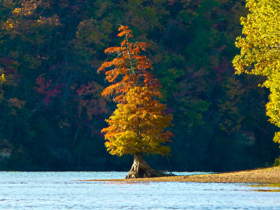 River, Tree, Autumn, Tennessee River, Island, Orange