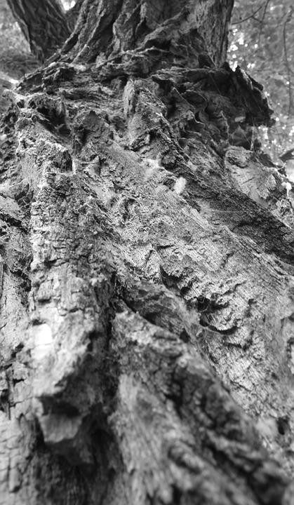 Wood, Landscape, Tree, Background, Texture, Black