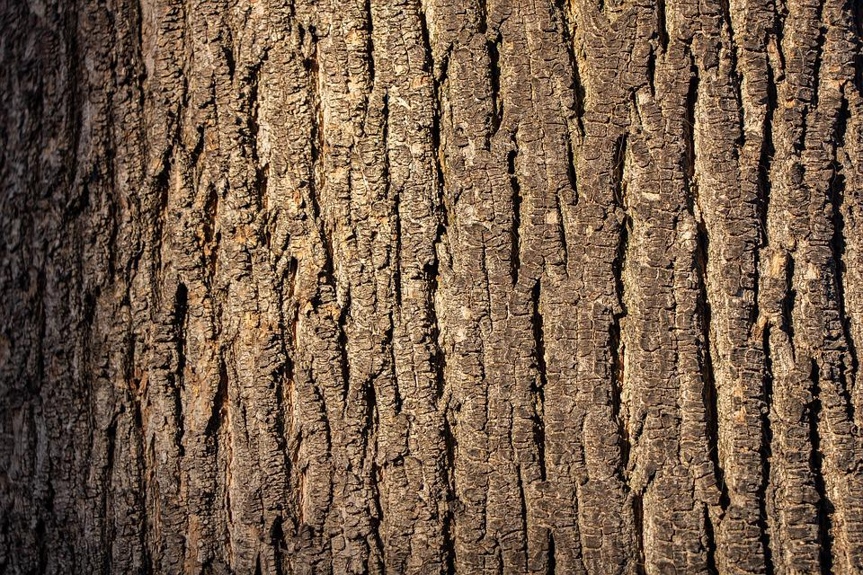 Wood Texture, Wood, Tree, Pattern, Texture, Nature