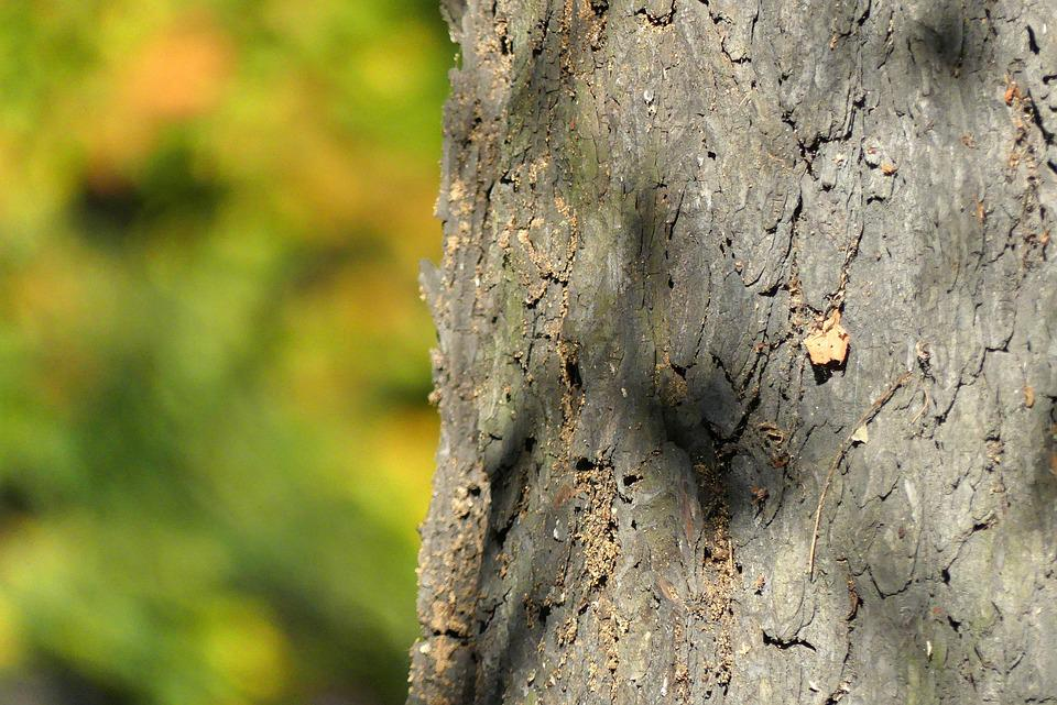 Tree, Trunk, The Bark, Autumn, Nature, Konary, Closeup