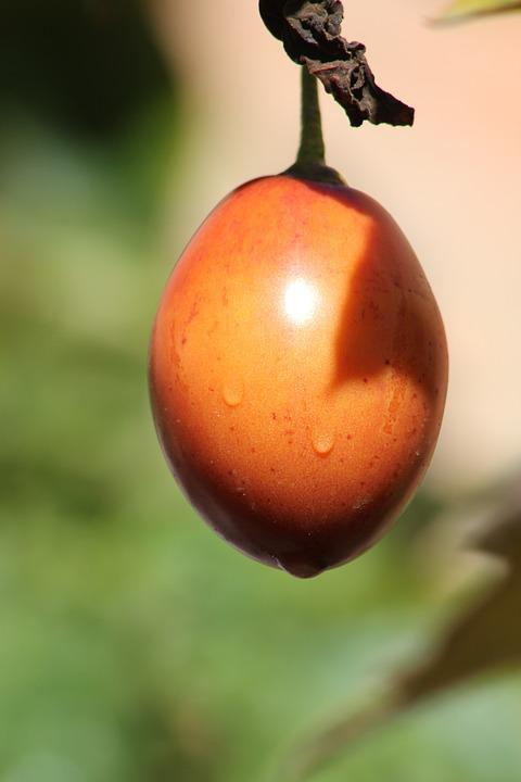 Tree Tomato, Tomato, Fruit, Tropical, Plant, Vegetables