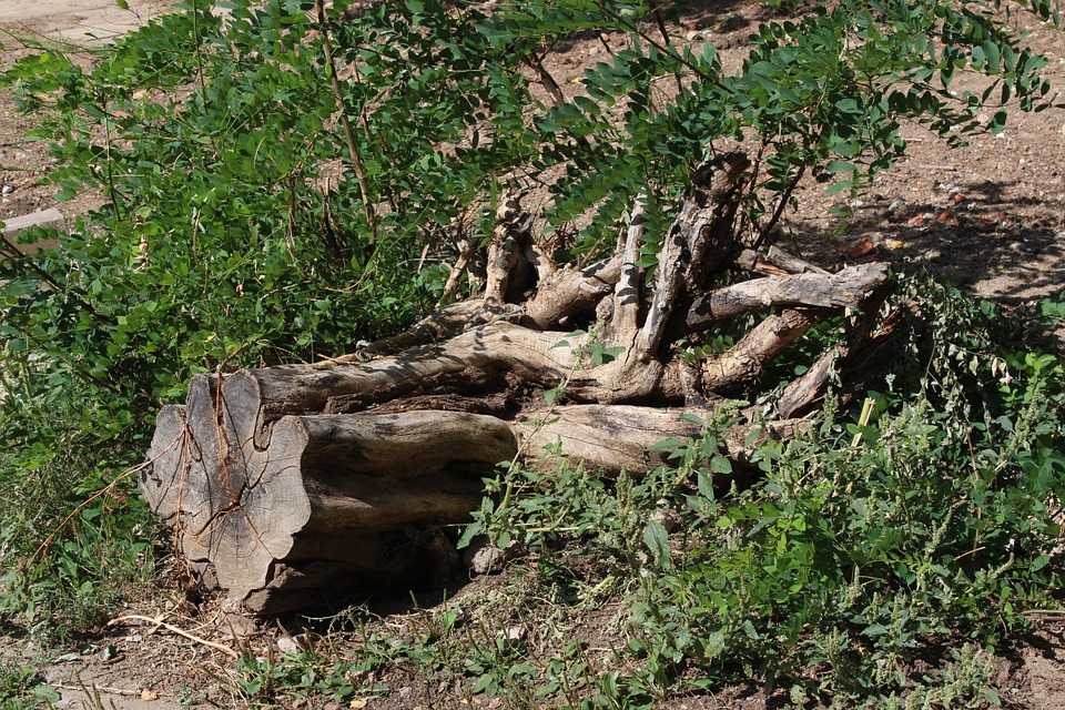 Tree, Root, Log, Tree With Roots, Natural, Trunk