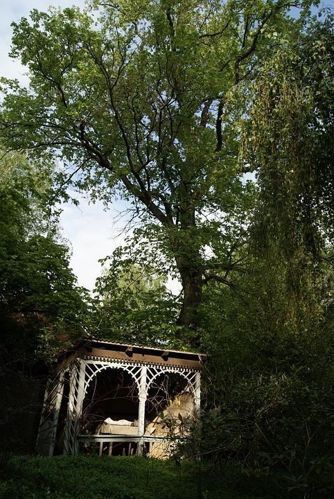 Garden, Tree, Trees, Outdoor, Idyll, Shadow