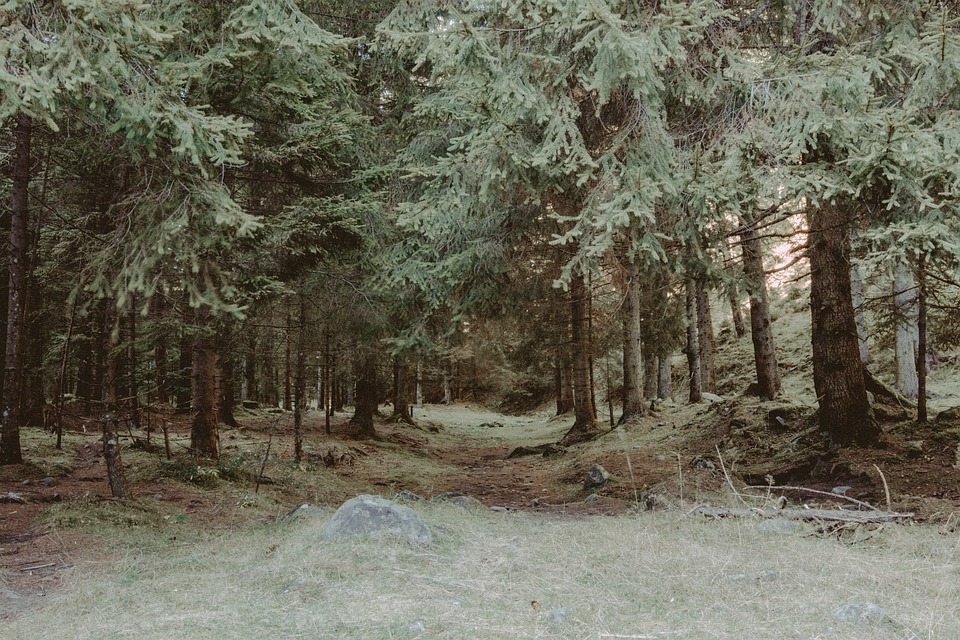 Forest, Nature, Trees, Tree, Road, The Path, Landscape