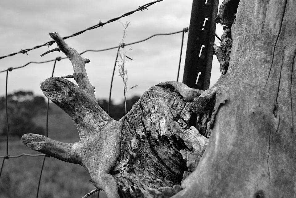 Fence, Barbed Wire, Tree Trunk, Post, Black And White