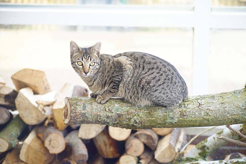 Cat, Cats, Tree Trunk, Wood