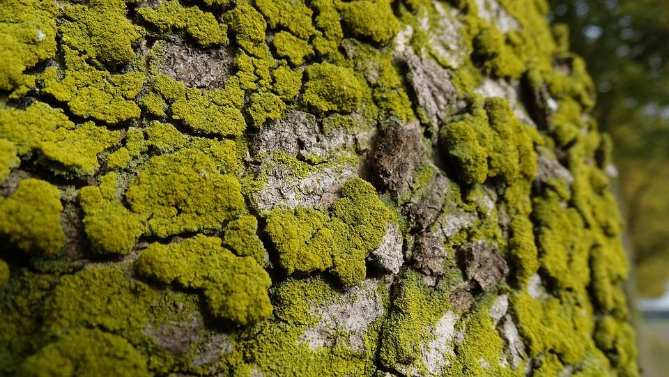 Tree Bark, Tree, Tribe, Tree Trunk, Nature, Forest