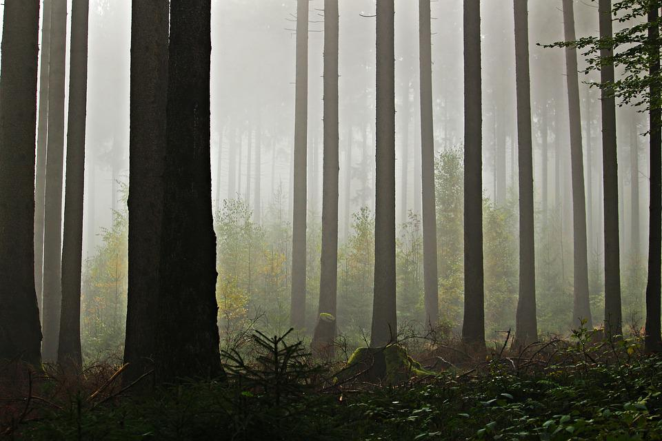 Fog, Forest, Trees, Nature, Mystical, Tree Trunks