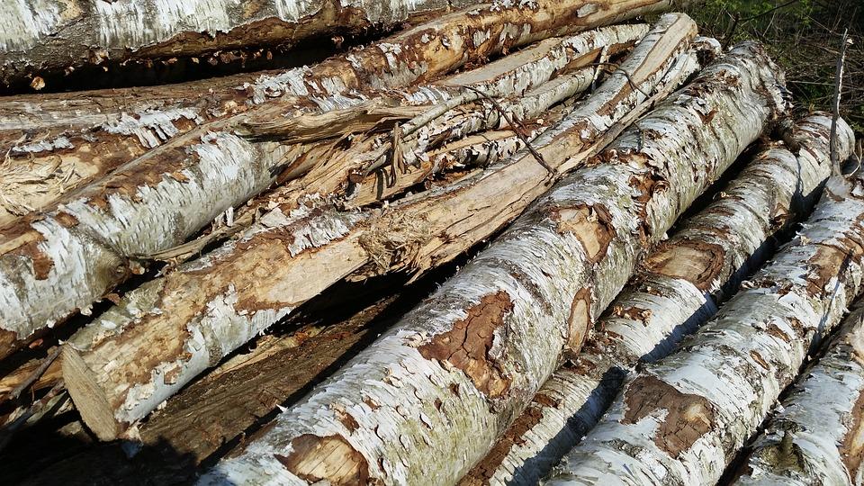Tree Trunks, Wood, Heat, Burn