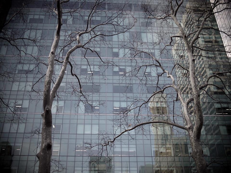 Tree, Building, Skyscraper, Reflection, Urban Forest