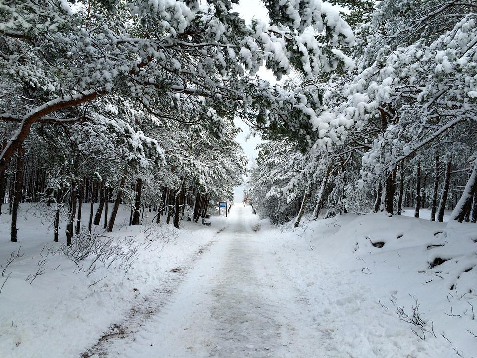 The Path, Winter, Snow, Nature, Wandering, Trail, Tree