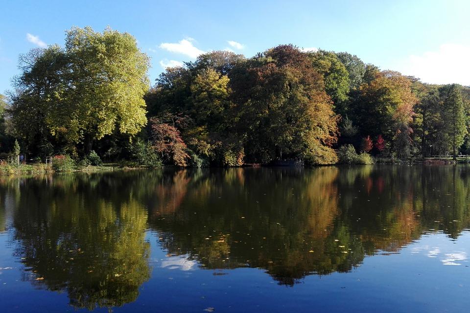 Waters, Nature, Tree, Lake, Reflection, Romberg Park