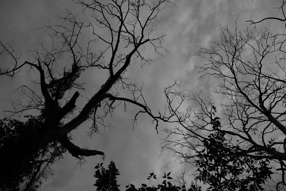 Black And White, Silhouette, Tree, Black, White, Nature