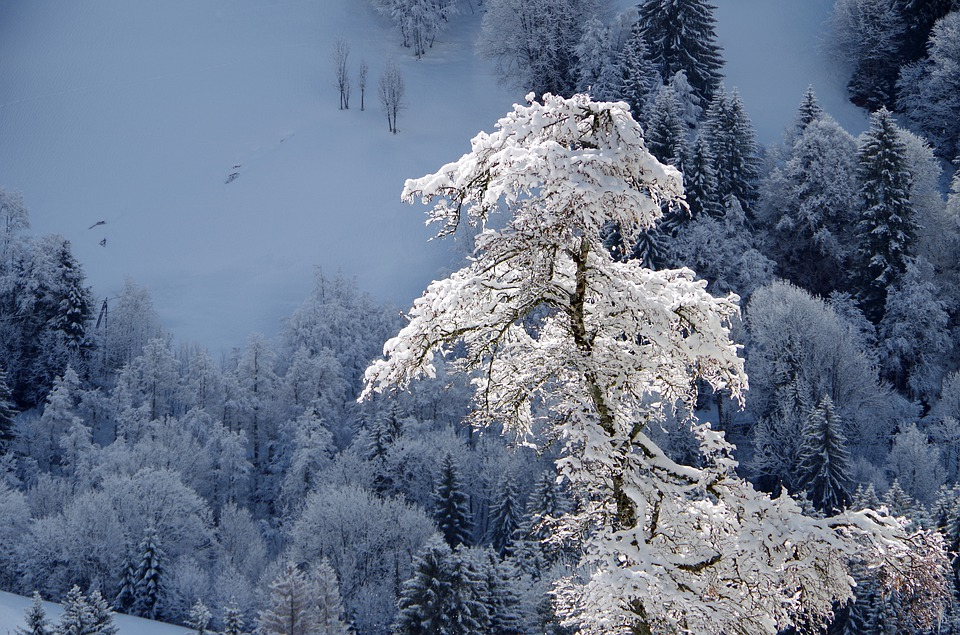 Mountain, Snow, Winter, Nature, Cold, Tree