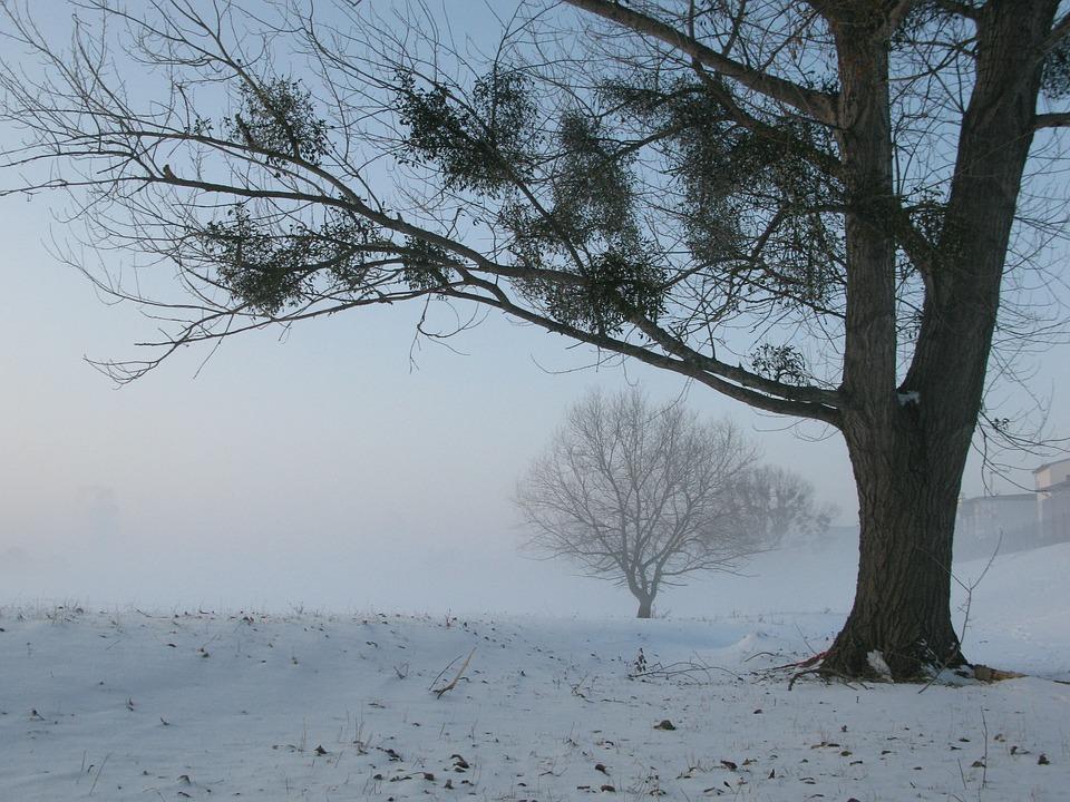 Winter, Fog, Mysterious, Tree
