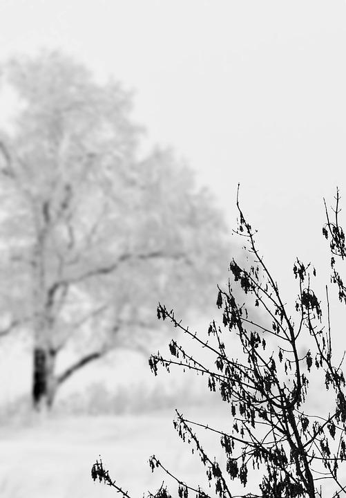 Snow, Landscape, Winter, Cold, White, Tree, Bush
