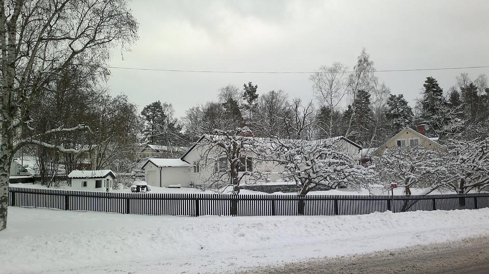 Winter, Tree, Snow, Nature