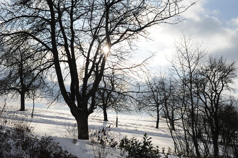 Eberdingen, Winter, Sun, Tree, Nature