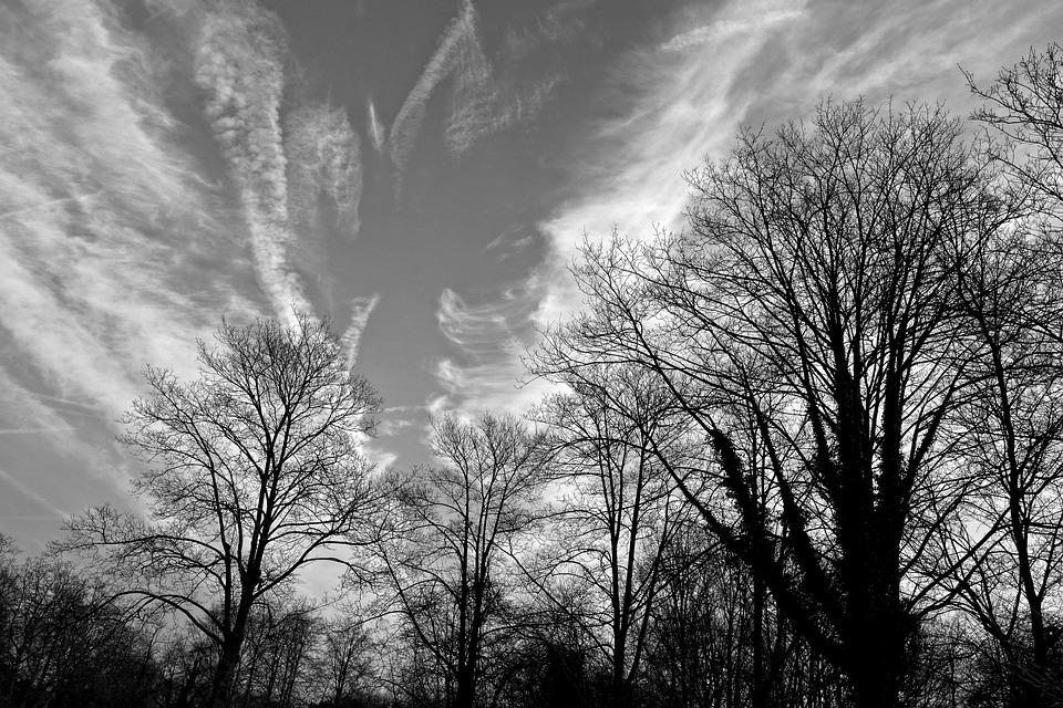 Tree, Branch, Bare Branch, Bare Tree, Winter Tree