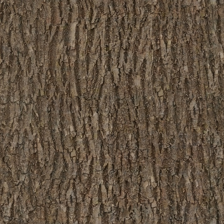 Bark, Wood, Tree, Seamless, Texture, Albedo, Base
